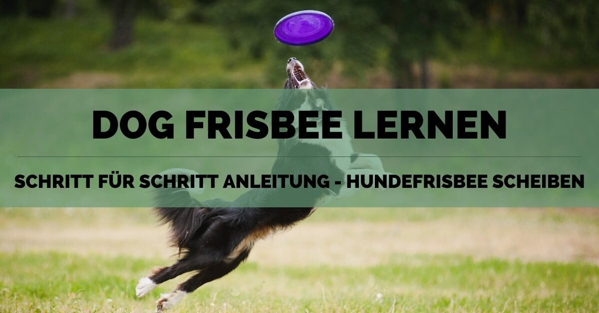 Dog Frisbee - FB