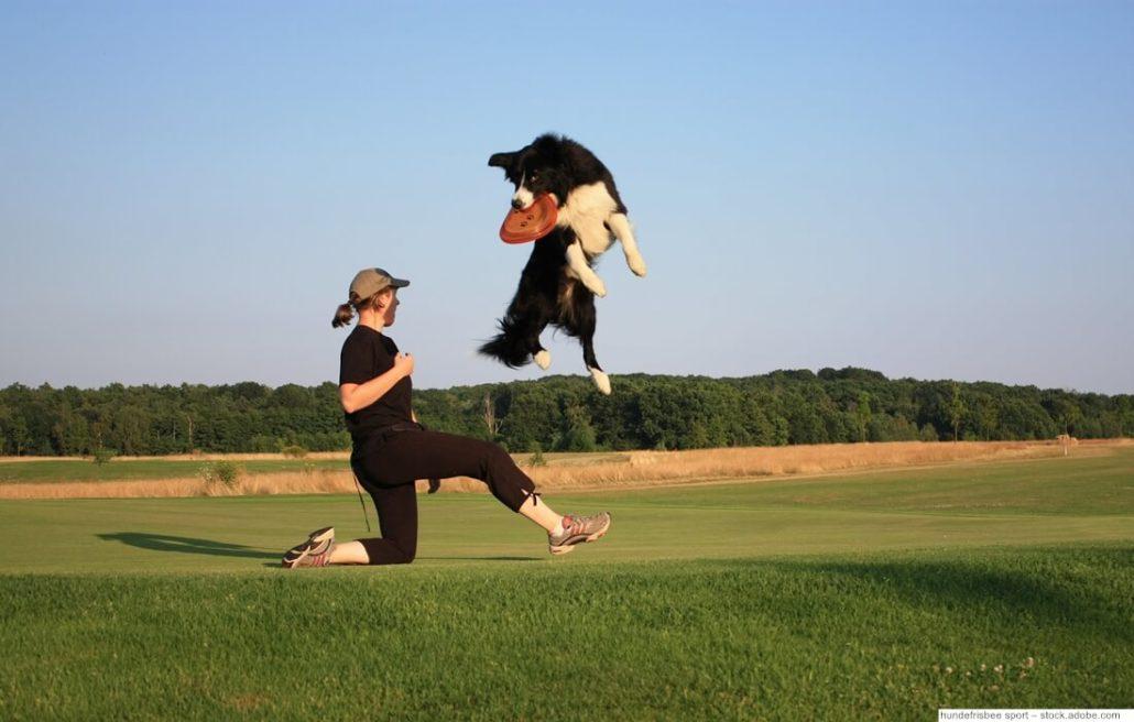 Dog Frisbee Sprung